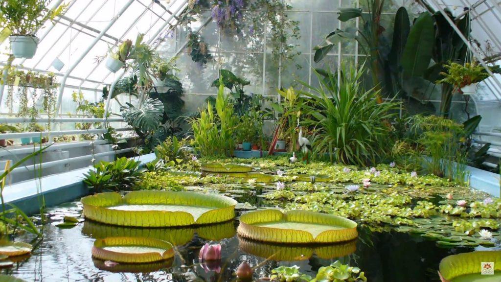Природа Ставропольского края. Ботанический сад